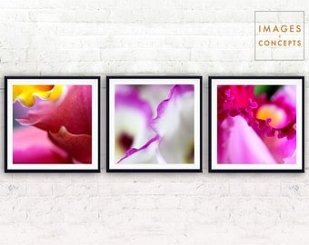 Abstract Orchids ~ Orchid Photo ~ Print Set ~ Flower Photography ~ Nature Wall Art ~ Modern Decor ~ Large Printable Art ~ Digital Download