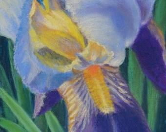 PURPLE IRIS FLOWER Close-up Original 10 x 8 Pastel Painting by Sharon Weiss