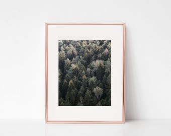 Forest Trees Wall Art, Nature Photography Wall Deco, Printable Art, Forest Trees Printable Poster, Nature Digital Print, Forest, Trees