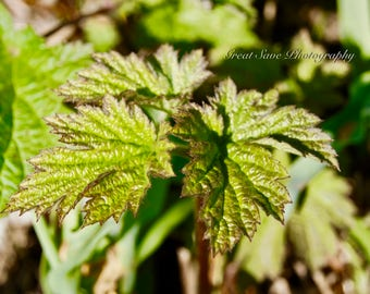 Leafy Greens, Photography, Home Decor