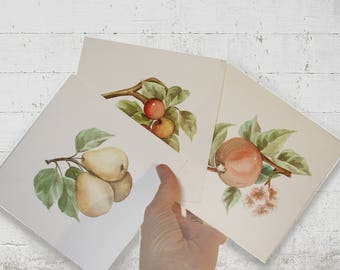 Watercolors with mixed fruit. Paintings of pears, cherries, pomegranate. Handmade kitchen decor. Art of home, gift girlfriends, sisters.