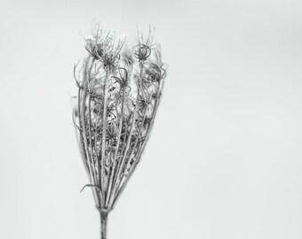 """Square FineArt print """"simplicity in winter VI"""""""