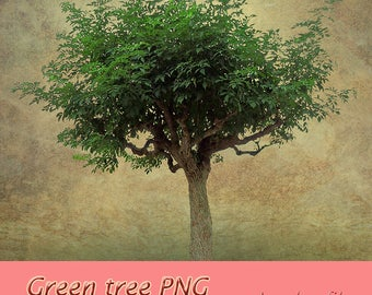 Green tree PNG, tree overlay, tree clear cut