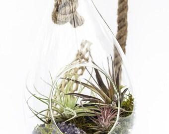 Teardrop Terrarium With Air Plants