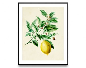 Lemon wall print, kitchen decor, printable fruit art, lemon printable art, lemon print, lemon prints, printable art, botanical print