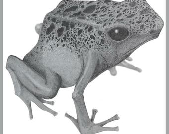 Dendrobates Tinctorius/Poison Dart Frog