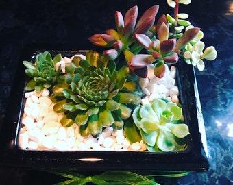 Joyful Modern Desk Succulent