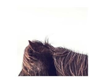 5x5 horse photograph, horse, minimal, animal, wall art, modern