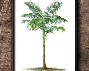 Palm tree · Instant Download · Botanical · Vintage · Wall · Printable · Digital File #93