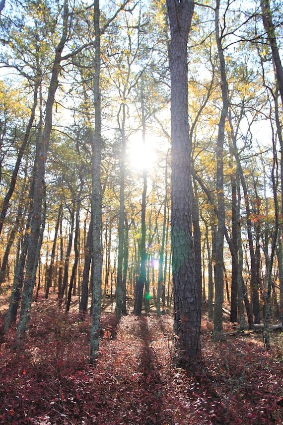 Sunlit tall trees
