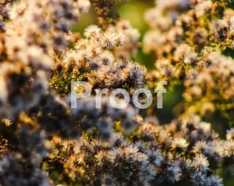 HD Flower Color Burst (Digital Download)