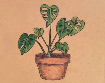 Custom botanical plant illustration