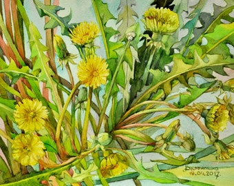 Floral Fine Art Watercolor Painting Dandelion - Original Watercolour Home Decor