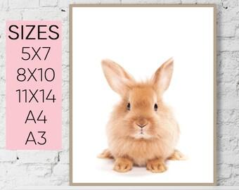 Rabbit Print, Bunny Rabbit Art, Baby Animal Print, Rabbit Wall Decor, Bunny Print, Woodland Animals, Nursery Decor Printable Art nursery art