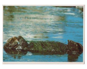 Sea Otter - Pacific Coast