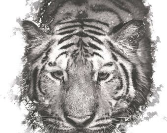 Tiger Poster 30x42cm (11x16 inches)