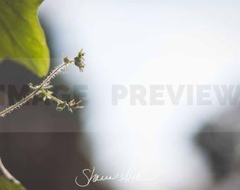 Backlit Bee on Flower
