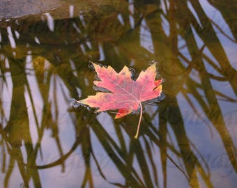 Fallen Leaf On Water