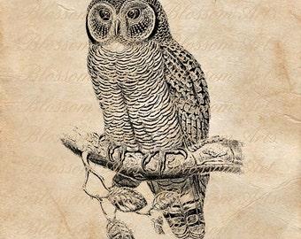 OWL Graphic Image Download Instant Download Scrapbooking Digital Collage Sheet