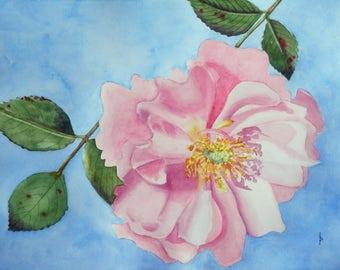 ROSE original watercolor SFA