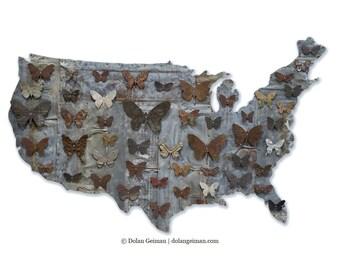 Industrial Modern American Butterflies Metal Wall Art