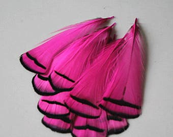 Pink and Black Feathers, Magenta Feathers with Black Tips, Bright Pink Feathers, 10 Pheasant Feathers in Pink Rose, 2-4 Inches