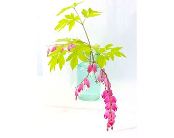 Bleeding Heart Plant, Flower Still Life Photography, Pink Chartreuse Turquoise Wall Decor