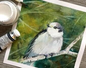 Grey Jay original watercolour painting