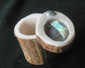 Abalone Shell  Carved Shed Elk Antler Box  Large Size  Cruelty Free Antler  Shell Inlay  OlyTeam