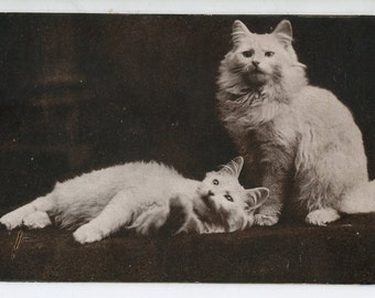 The Cute Kitty Company, white kitty cats,  antique cat postcard, RPPC, real photo postcard, vintage cat postcard
