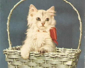 White cat with red ribbon in basket vintage Belgian Postcard , Vintage Cat Postcard