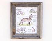 Children's Art  -- Woodland Guide Gray Wolf -- Archival Art Print