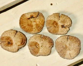 Oak wood buttons/slices - 5 pc. set