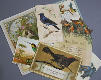 Vintage BIRD CARDS- Bird Collection- Paper Ephemera- Framable Cards- 1929- Gold Embossed- Germany- Paris- Antique Cards