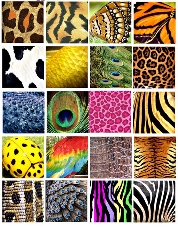 Animal Insect skin textures patterns clip art collage sheet 2 inch squares tiger bird butterfly digital download graphics images printables