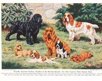 1940s American Cocker Spaniel Dog Print -  Vintage Antique Animal Zoology Pet House Home Decor Book Plate Art Illustration for Framing