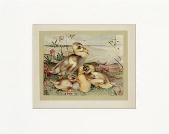 Beautiful Domestic Farm Animals Vintage 1921 Duck's Weather Print