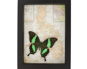 Vintage Map of Philippines with Native Real Framed Butterfly