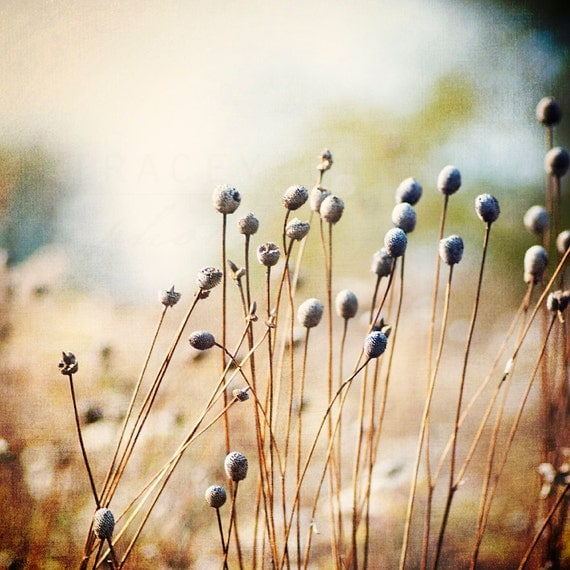 Nature Photography, rustic fall photograph of the Chicago prairie, landscape wall art print, Autumn home decor, indigo, gold, creme, earth