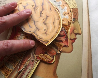 1888 Practical Home Physician Medical Encyclopedia for Art Collage etc Anatomical Illustrations by Levi Yaggy