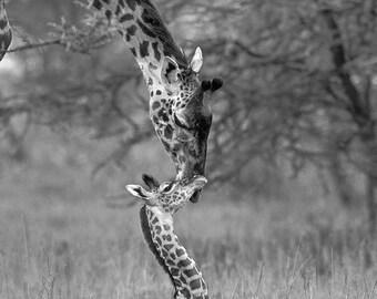 Safari Baby Shower Card, GIRAFFE MOM and BABY Card, Blank Greeting Card, Baby Animal Photograph, Wildlife, New Baby, Photo Card, Mothers Day