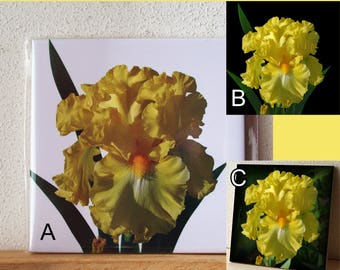 Ceramic tile Iris 'Power of One', ONE decorative wall tile, floral tile, yellow flower, summer garden, floral photograph