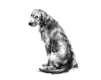 Labrador dog Drawing - fine art dog print - Labrador gift