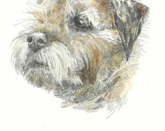 Print - Toby - Border Terrier