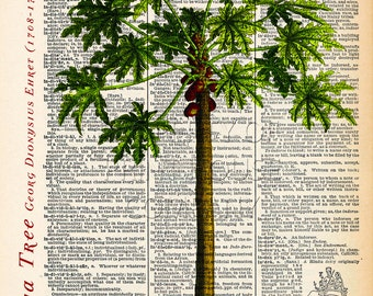 "Papaya Tree dictionary print, Vintage Botanical Illustration, Printed on an 8""x11"" Antique Dictionary Page."