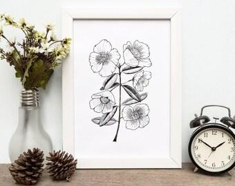 SUMMER SALE - Botanical Illustration Blossom Art Print, flower art, illustrated botanical artwork, art print gift, wall art flora fauna