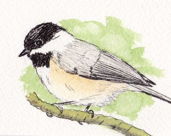 Black-capped Chickadee ACEO Artist Trading Card,bird,animal,nature,collectible,original art, not a print, watercolor,pen and ink,