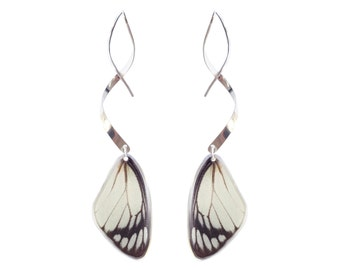 Real butterfly wing earrings with sterling silver twist - Butterfly Wing Jewelry, Natural, Elegant, Fancy, Lightweight