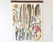 Vintage Feathers Illustration and Magnetic Poster Holder - Walnut Print Hanger Wooden Poster Hanging Wood Photo Frame Plumes Feather Artwork