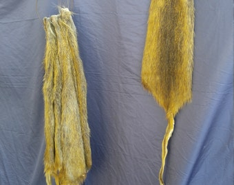 1 Tanned nutria rat Fur hide Pelt real animal skin taxidermy rug part piece man cave craft